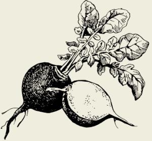Салат из редьки с солёными огурцами, перцем и яблоками