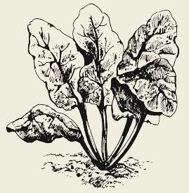 Салат «Огородный»