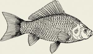 Рыба запечённая