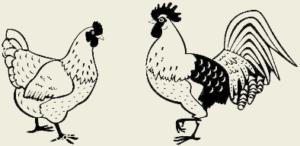 Курица тушёная