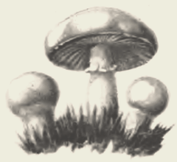Солянка овощная с грибами (консервы)