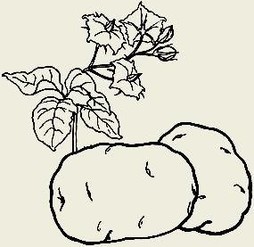Картофель тушёный