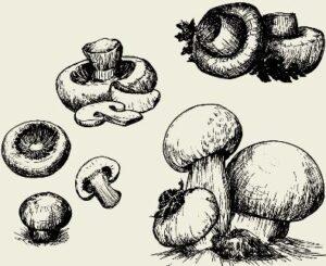 Соус грибной